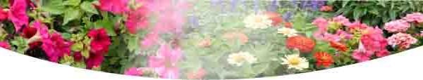 মরসুমী ফুলের বাহার