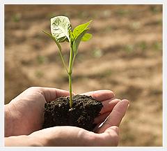 আধুনিক কৃষি বিপণন ব্যবস্থা -উৎপাদন বৃদ্ধি ও অর্থনৈতিক উন্নয়নের চালিকাশক্তি