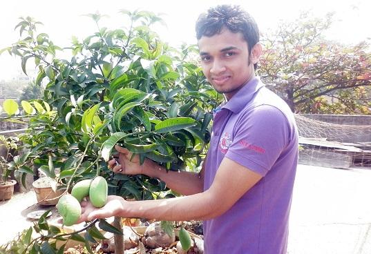 rangunia-mango-pic-2