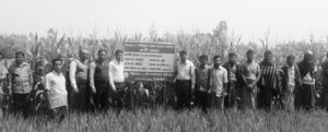 গোপালপুরে ভুট্টা প্রদর্শনীর মাঠ দিবস অনুষ্ঠিত