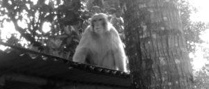 সেতাবগঞ্জে বিরল প্রজাতির