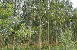 পরিবেশ সুরক্ষা ও জাতীয় অর্থনৈতিতে বৃক্ষের অবদান