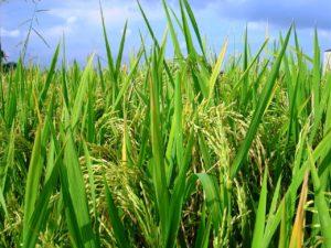 """ভবিষ্যত """"খাদ্য উৎপাদন, ব্যবস্থাপনা ও খাদ্য নিরাপত্তায়""""  বাংলাদেশের করণীয়"""